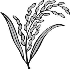 কেবল প্রধানমন্ত্রী যা চাইবেন তাই হবে: রিজভী